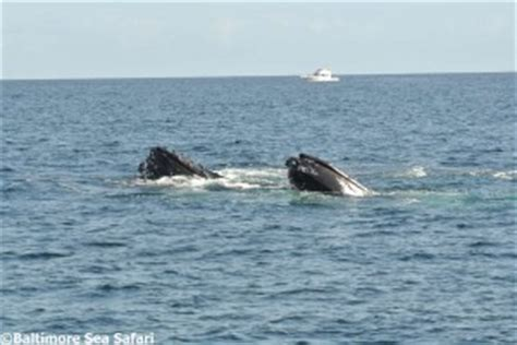 Humpback Whale Watching boat trip in West Cork, Ireland