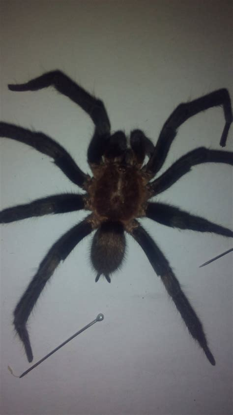 species identification - What kind of spider is this and