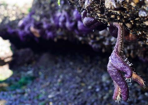 Tide Pools and Adaptations | Smithsonian Ocean