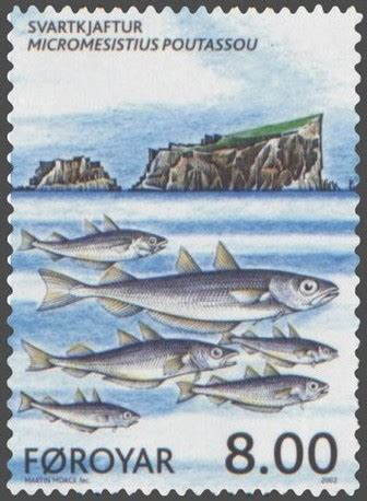 Couch's whiting (Micromesistius poutassou) - Pictures and