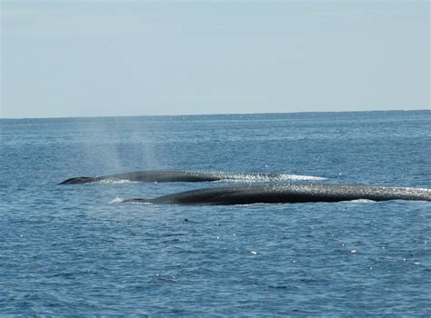 2013 was an exceptional whale watching year…