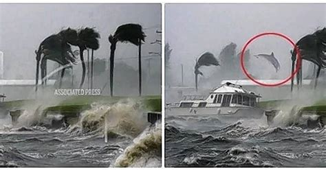 Facts Matter: Photo of airborne dolphin in hurricane has